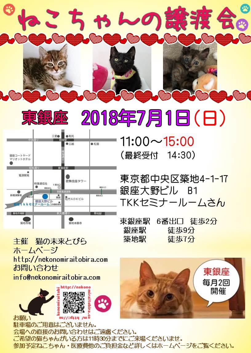 【 第12回】 <br>東京東銀座にて ねこの譲渡会開催