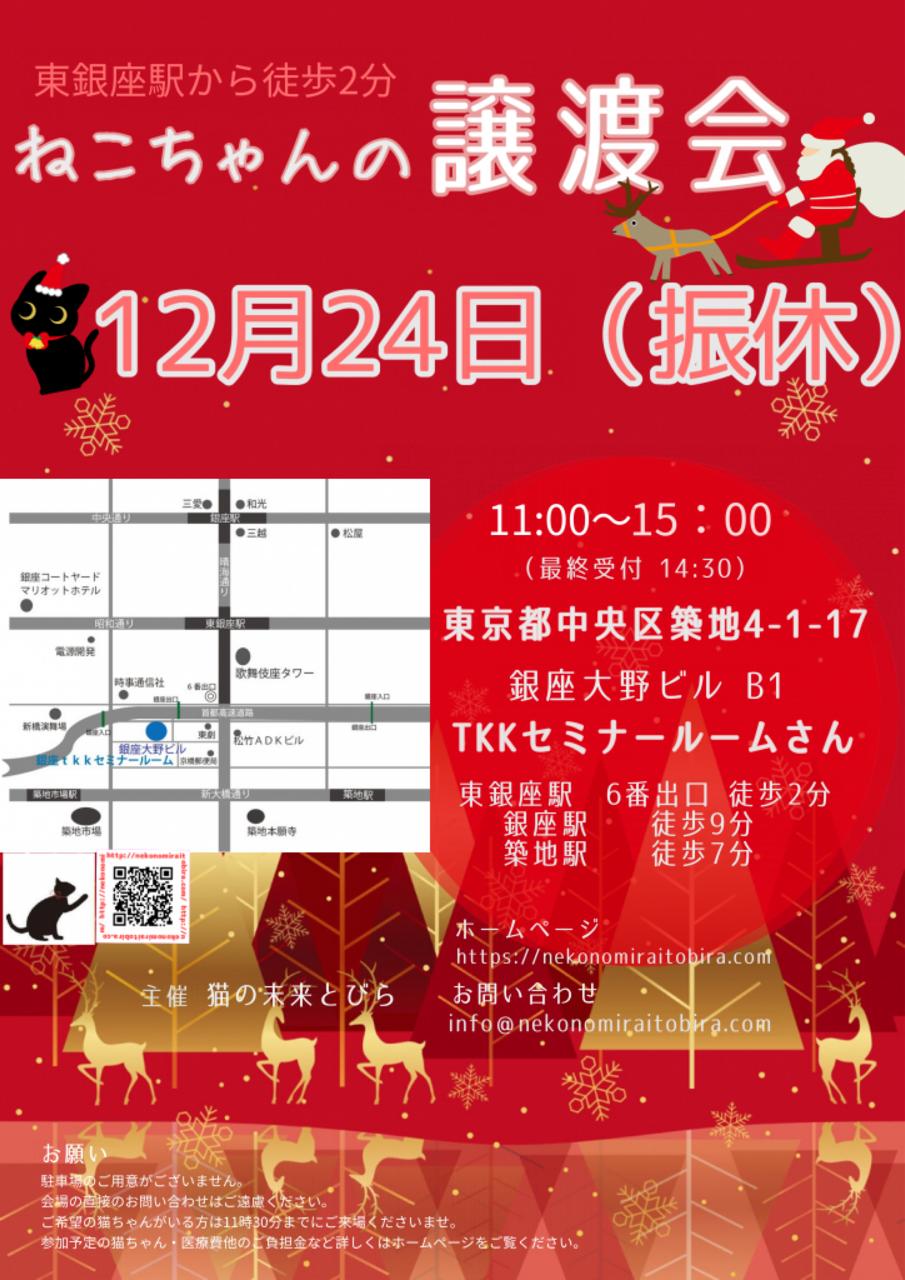 【 第24回】 <br>東京東銀座にて ねこの譲渡会開催
