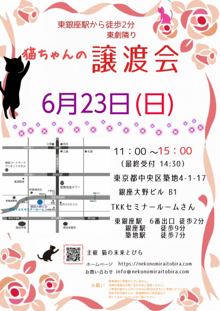 【 第35回】 <br>東京東銀座にて ねこの譲渡会開催