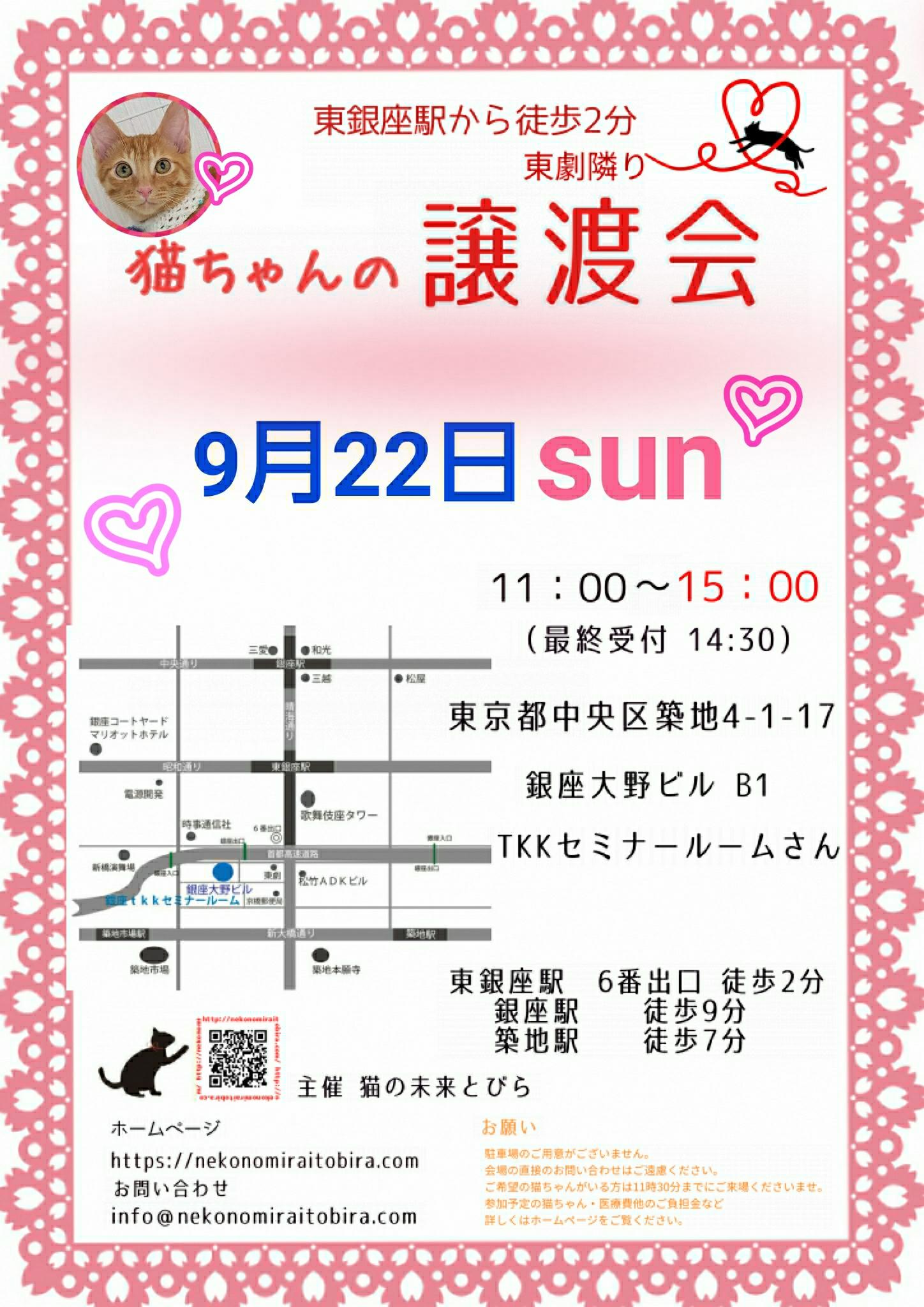 【 第41回】 <br>東京東銀座にて ねこの譲渡会開催