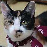 【11/3決定】キキちゃん4カ月半