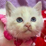 【11/17参加】ピンクちゃん2ヶ月