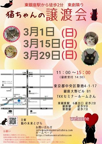 【 第53回】 <br>東京東銀座にて ねこの譲渡会開催