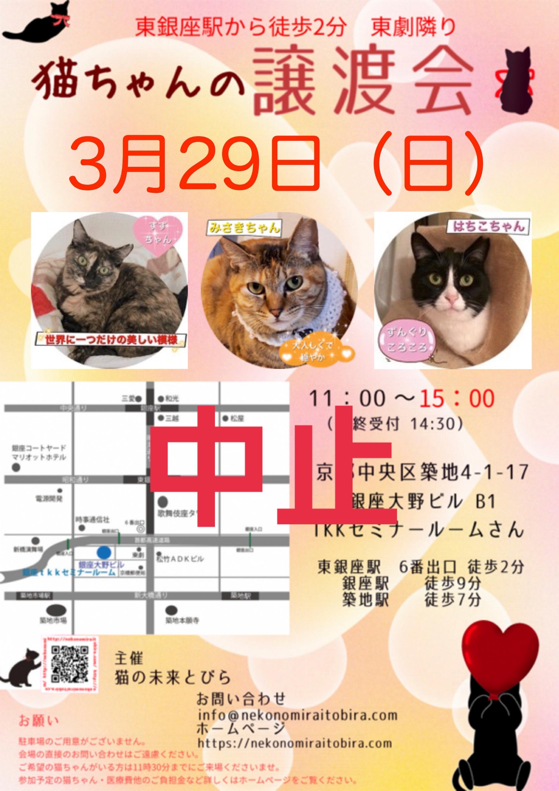 開催中止【 第55回】 <br>東京東銀座にて ねこの譲渡会開催